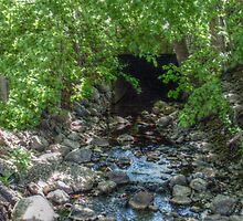 Unusual Brook Tunnel, Caldwell NJ by Jane Neill-Hancock