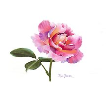 A Single Pink Rose for your ipad! by Pat Yager
