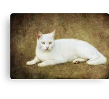 mr. white Canvas Print