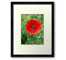 Plantation Poppy Framed Print