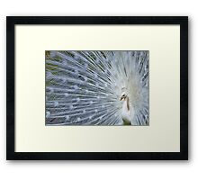 ..The happy Easter Peacock...  Framed Print