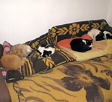 Pepi, Sheba, Alina, Sinbad and Patrick at Home by Dennis Melling