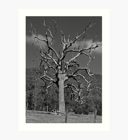 Dead Tre: Hunter Valley Art Print