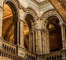 Natural History Museum by mattwhitby