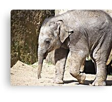 Smallest of the Herd Canvas Print