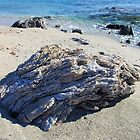 Boulder  On Beach by Francis Drake