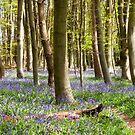 Springtime Blues by mikebov