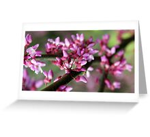 Redbud Blossoms Greeting Card