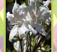 Beautiful White Azalea Get Well Card by valleygirl
