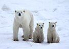 Family Portrait #1 - Polar Bears, Churchill, Canada by Carole-Anne