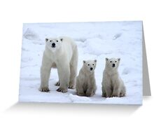 Family Portrait #1 - Polar Bears, Churchill, Canada Greeting Card