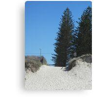 Norfolk Pine! Canvas Print