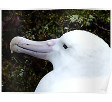 Southern Albatross Poster