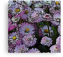 Cartoon daisies Canvas Print