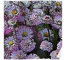 Cartoon daisies Poster