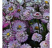 Cartoon daisies Photographic Print