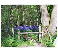 Entrance to the Bluebell Wood Poster