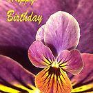 Birthday Pansy Flower  by martinspixs