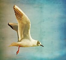 Bird in Flight by Liz Scott