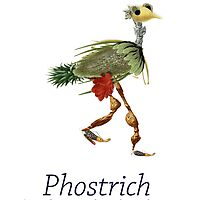 Phostrich by Kristi Nobers