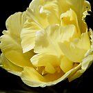 Sunshine Yellow by ElsT