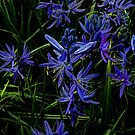 I Love Blue by Charles & Patricia   Harkins ~ Picture Oregon