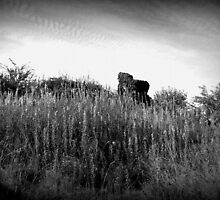 Windswept heath by PotterIancito