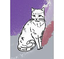 Cute Sitting Cat Photographic Print