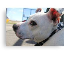 Buster t. Staffy Canvas Print