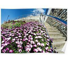 Lyme Regis In Bloom Poster