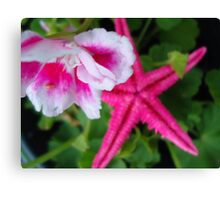 starfish in the flower pot Canvas Print