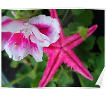 starfish in the flower pot Poster
