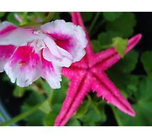 starfish in the flower pot Photographic Print
