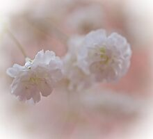 Baby's breath by shalisa