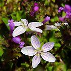 May Flowers by WildestArt
