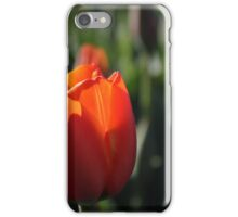 red tulip on spring iPhone Case/Skin