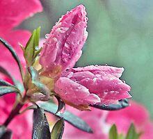 Happy Easter by Brenda Dow