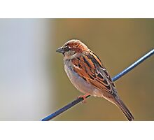 Bird On A Wire ! Photographic Print