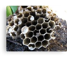 A beehive of information Canvas Print