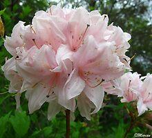 Spring Blush by MarianBendeth
