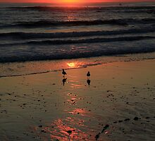 Sunrise With Seagulls by Noel Elliot