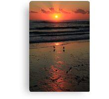 Sunrise With Seagulls Canvas Print