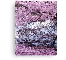 Cherry tree branches with pink blossom touching water art photo print Canvas Print