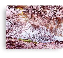 Blossoming cherry tree branches touching water art photo print Canvas Print