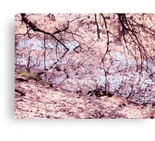 Cherry blossom touching water art photo print Canvas Print