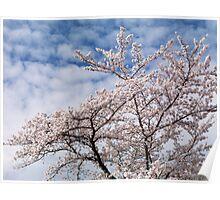 Cherry tree blossom over blue sky art photo print Poster