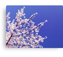 Cherry blossom over blue sky background art photo print Canvas Print