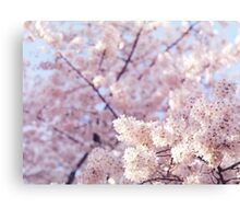 Artistic closeup of cherry blossom art photo print Canvas Print
