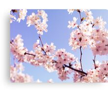 Cherry blossom closeup art photo print Canvas Print