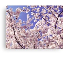 Cherry blossom over blue sky art photo print Canvas Print